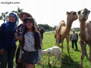 6 Malaysia Agro Exposition Park Serdang MAEPS