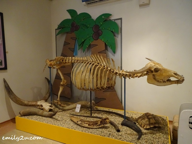 6. animal skeleton