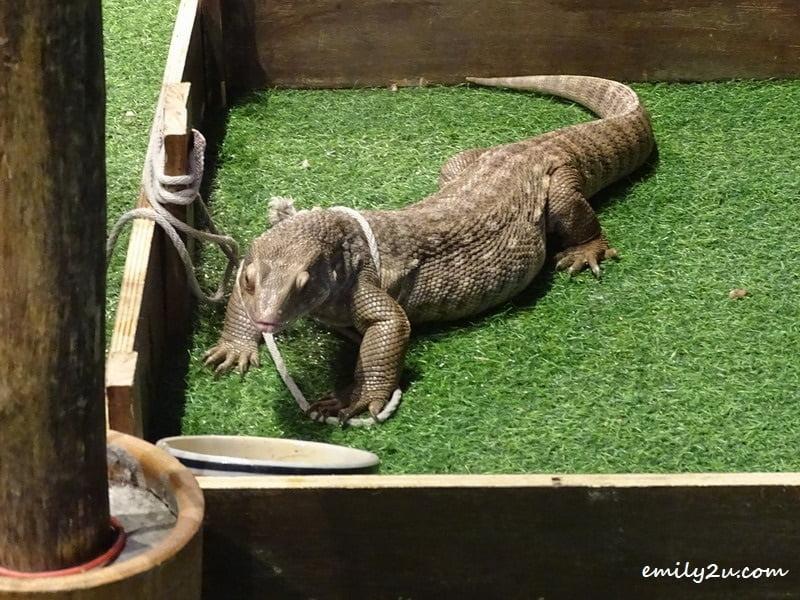 12. lizard