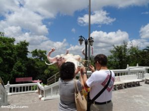 18 Hat Yai Municipal Park