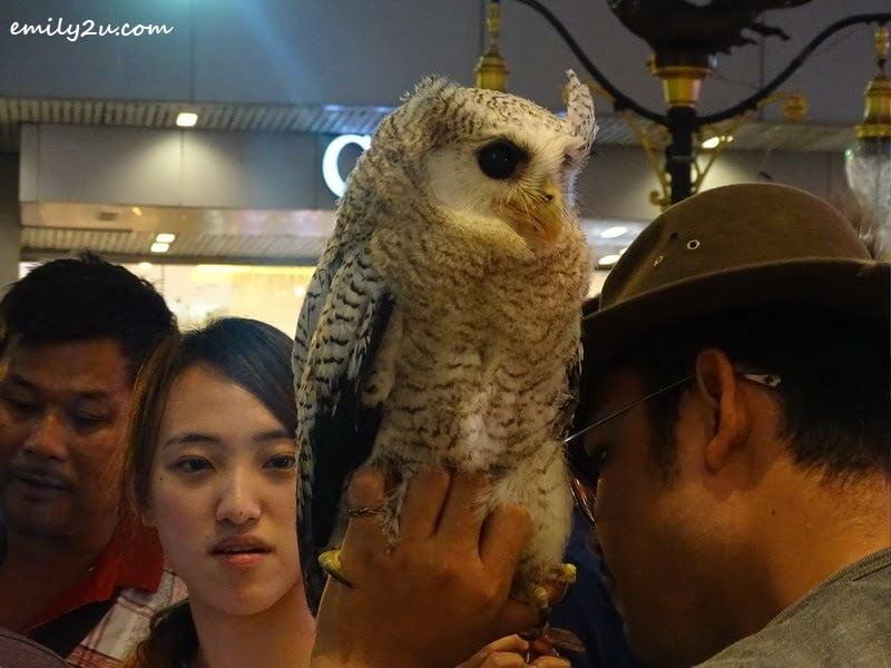 9. white owl