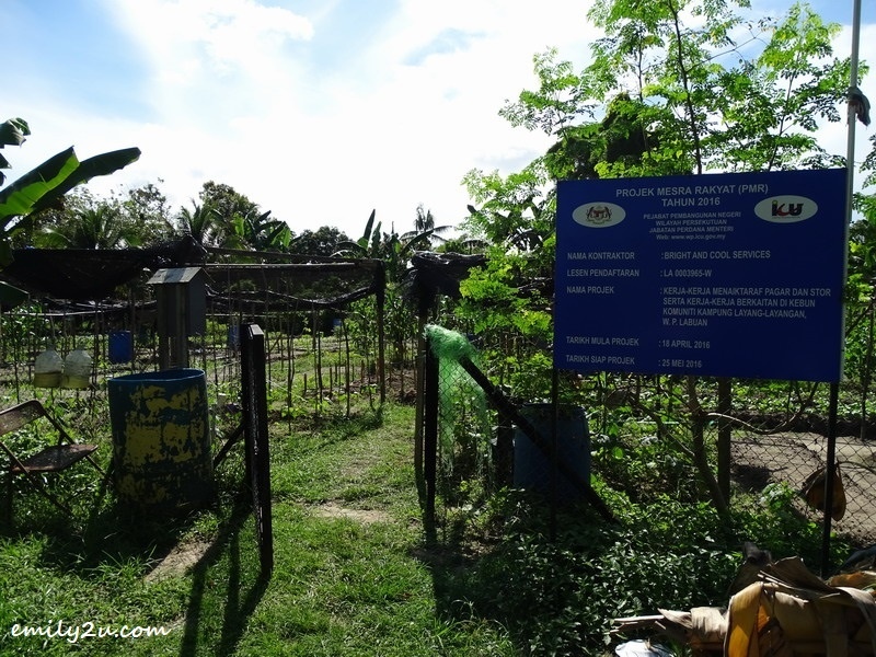 1. community farming at Kampung Layang-Layangan, Labuan