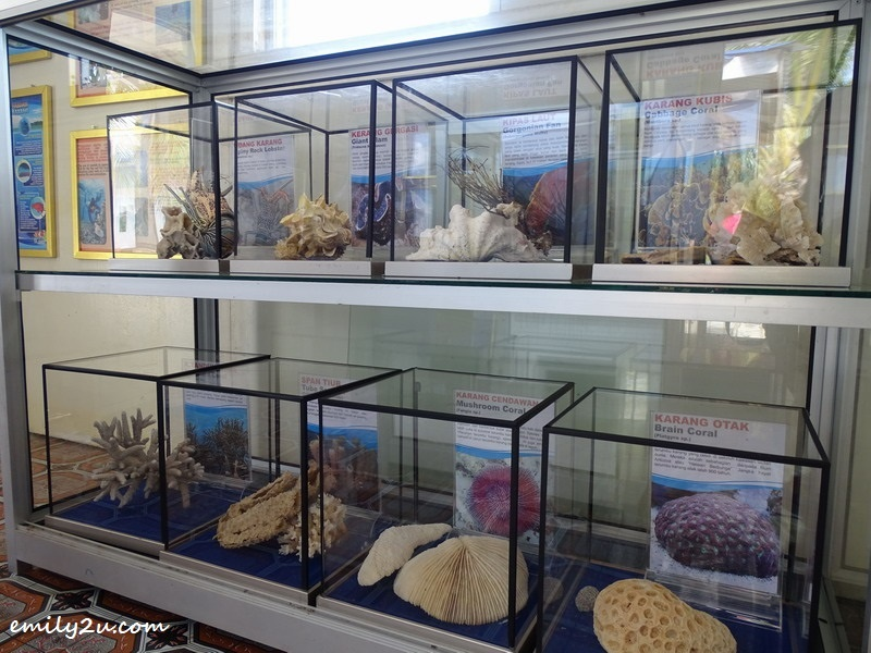 10. coral samples on display