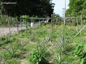 2 Community Farming Labuan
