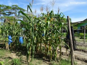 4 Community Farming Labuan