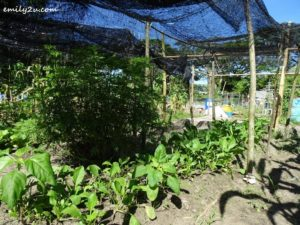 6 Community Farming Labuan