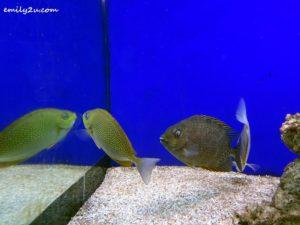 6 Labuan Marine Museum