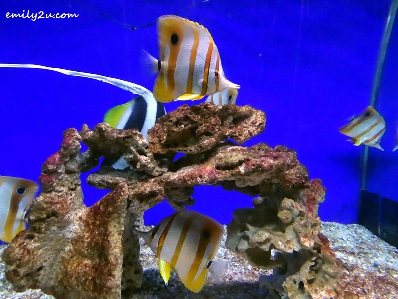 7. Butterfly fish