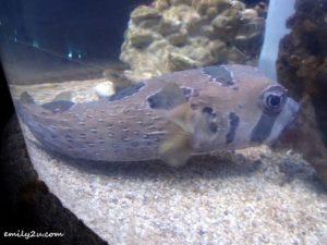 8 Labuan Marine Museum