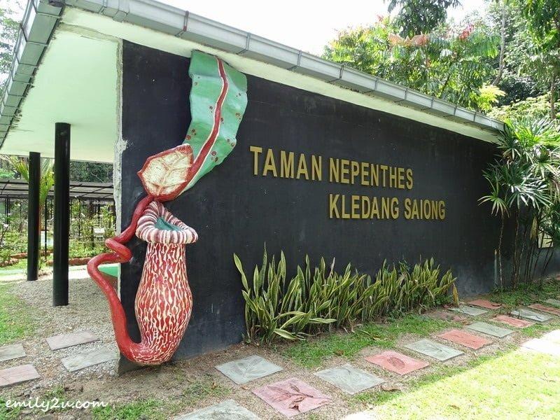 13. Taman Nepenthes