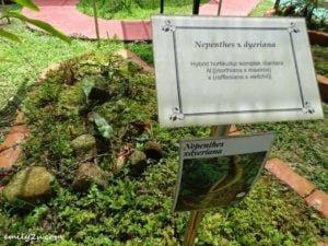 14 Kledang Saiong Forest Eco Park