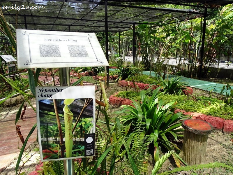 19. much knowledge can be gained from different species of pitcher plants