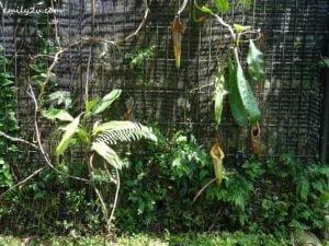 18 Kledang Saiong Forest Eco Park