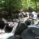 24 Kledang Saiong Forest Eco Park