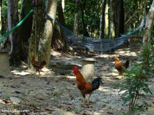 28 Kledang Saiong Forest Eco Park