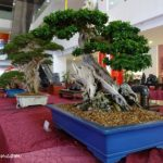 Bonsai & Suiseki Exhibition @ One Octagon, Ipoh