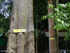 6 Kledang Saiong Forest Eco Park
