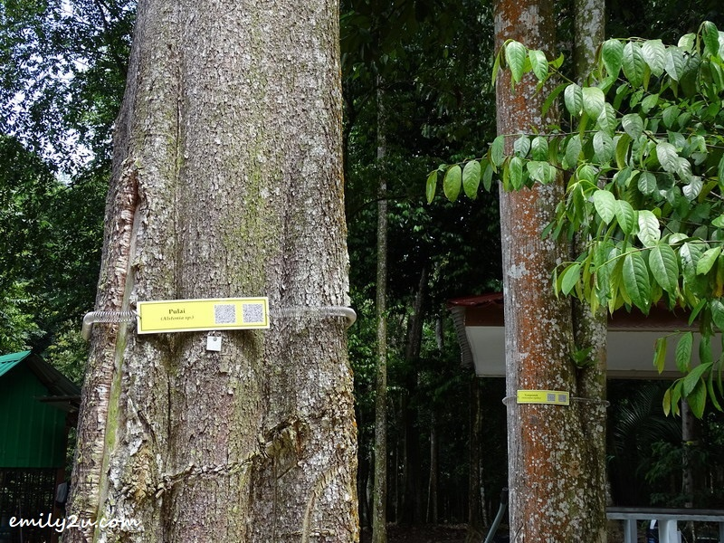 6. trees are tagged and barcoded