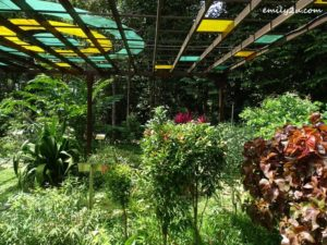 8 Kledang Saiong Forest Eco Park