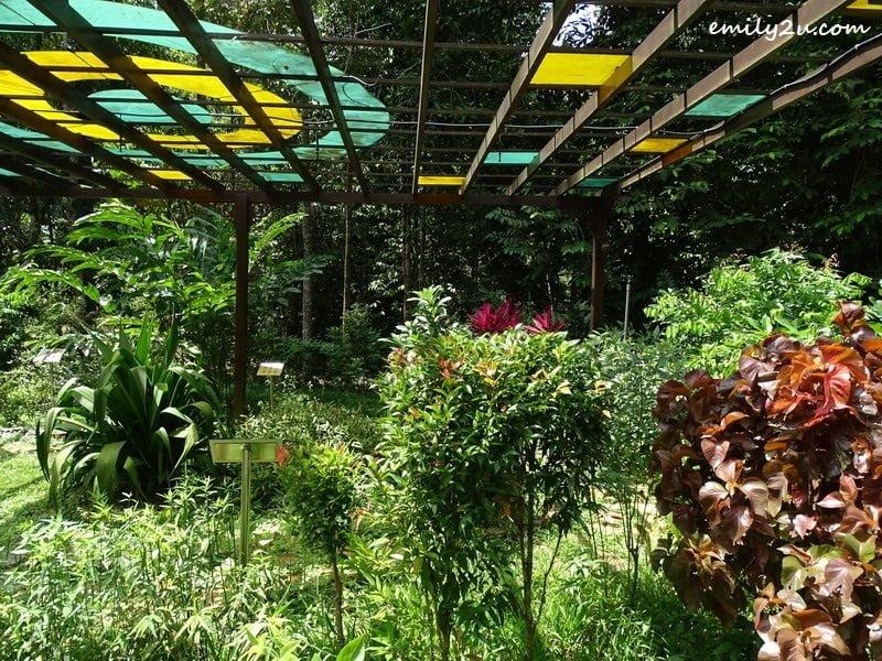 8. various types of plants in the nursery