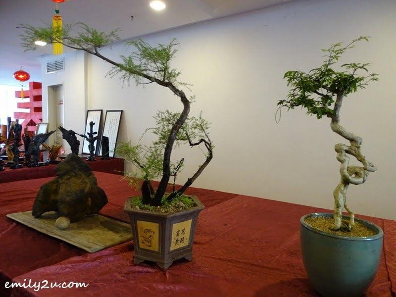 9. Bonsai