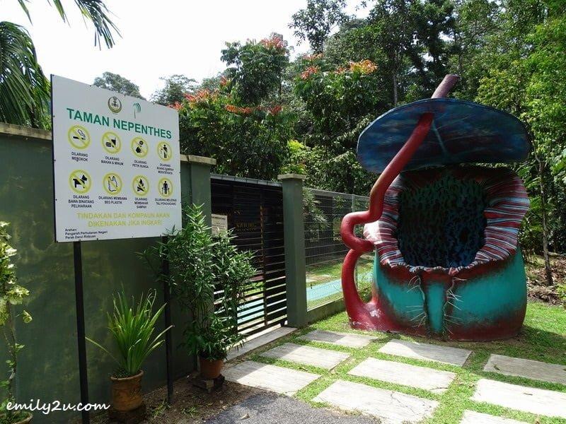 12. Taman Nepenthes