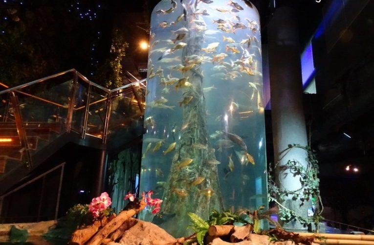 Aquaria KLCC: World Class Oceanarium