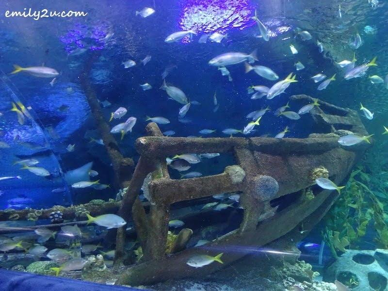 15. underwater scene