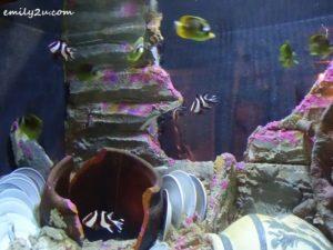 8 Aquaria KLCC