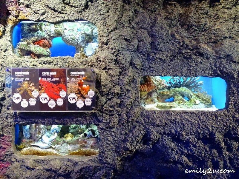 9. coral samples