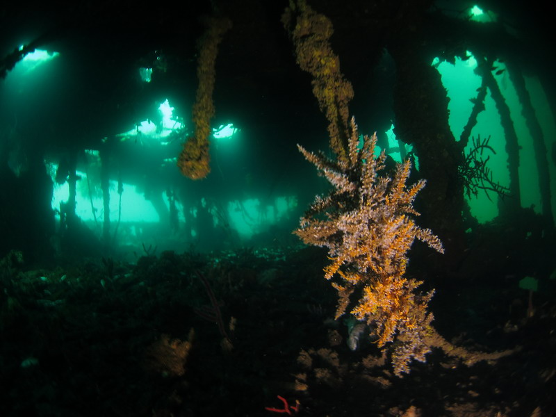 one of the wreck sites