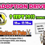 Announcement: Cat Adoption Drive by Noah's Ark Ipoh Animal Welfare