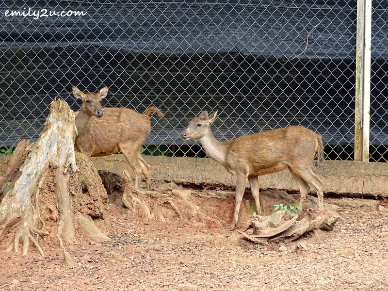 11. deer