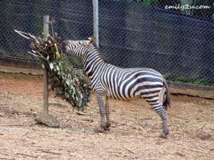 14 Melaka Zoo