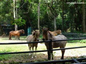 15 Melaka Zoo