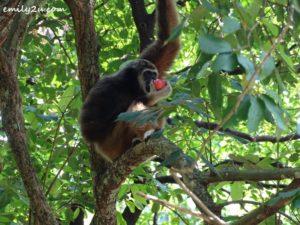 16 Melaka Zoo