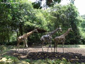 17 Melaka Zoo