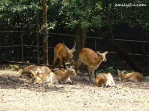 18 Melaka Zoo