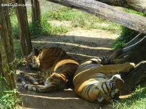 21 Melaka Zoo