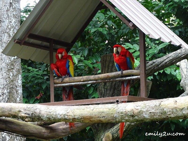 4. scarlet macaw
