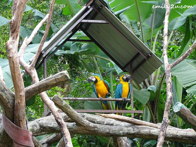 5. blue & yellow macaw