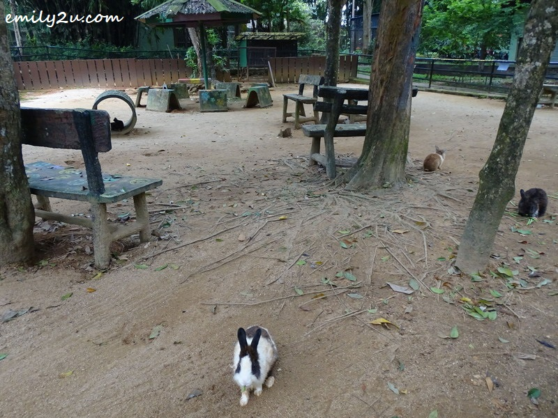 7. rabbit feeding area