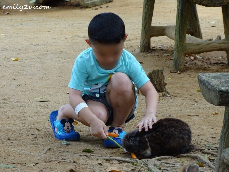 8. visitor feeds a rabbit