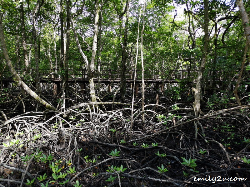 5. the roots of the mangrove trees are mangled; their purpose is to hold the ground together