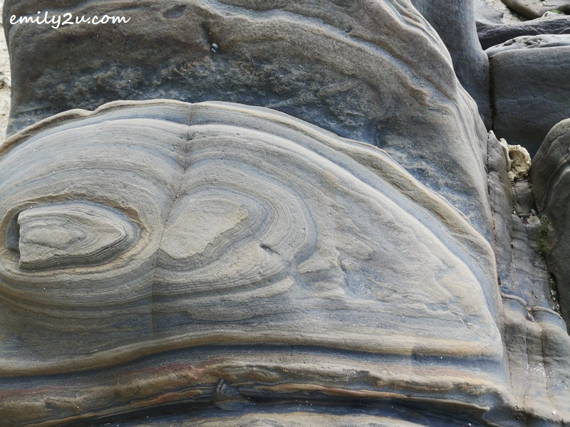 7. close-up photo of a rock with its swirly pattern