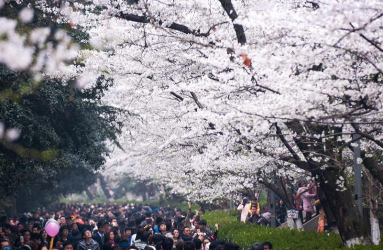 Wonderful Wuhan