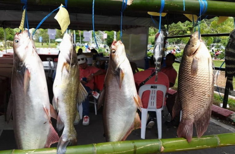 6.790kg Patin Fish Bags Angler RM5K Cash Prize