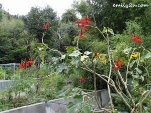 12 Sanwan Township Park