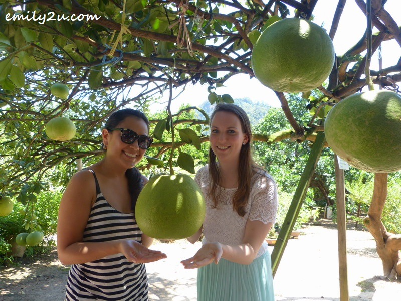 Tefa (L) & Anne (R) at a pomelo farm in Tambun, Ipoh