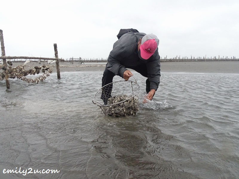 guide washes the oysters that have been harvested